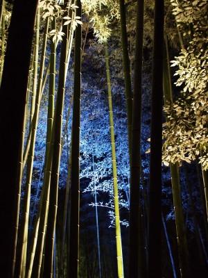 竹林の小径(1)