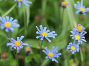 この花の名前は?(^^;