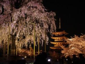 東寺の五重塔としだれ桜