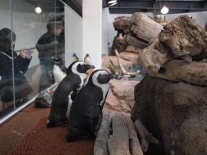 京都水族館のペンギン